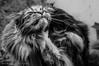 Il grattino (frillicca) Tags: 2017 animal animale animali aprile bn bw biancoenero blackandwhite castrocaroterme cat gatto monochrome monocromo nikkor nikkor18300mmf35 nikon nikond300 piacere pleasure