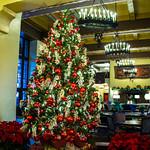 Christmas Trees thumbnail