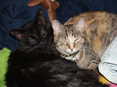Twix and KitKat (lorablong) Tags: twix kitkat pet cat westhollywood california