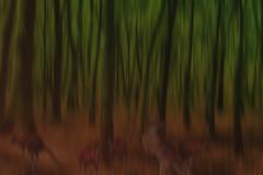 a sunburnt country (Greg Rohan) Tags: sydneyparktrees asunburntcountry d750 2017 trees green brown orange sunburnt australia kangaroo blur kangaroos nikkor nikon