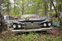 White Cars (epaves68 Thanks for 2.500.000 views!) Tags: white cars uscars junkyard weeds classics voiture ancienne car clunkers overgrown american schrott scap vehicle usa us auto vintage chrome fins fenders rust woods crusty wreck salvage junk forgotten outdoor trees forest abandoned lost exploration decay rusty cargraveyard nature bois autofriedhof automobile epave epaves urbex buick chevrolet chrysler desoto ford lincoln nash oldsmobile plymouth studebaker volkswagen
