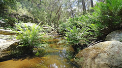 Nattai Creek_11 (Tony Markham) Tags: fortyfootfalls 40footfalls lakealexandrareserve nattaicreek creek waterfall falls sourthernhighlands bushwalk walk