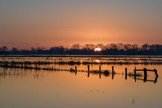 Sonnenaufgang Borgfelder Wümmeniederung