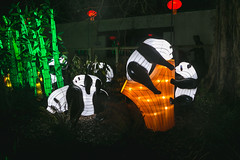Wild Lights (Strangelove 1981) Tags: 2017 dublinzoo ireland wildlights zoo night lights glow light animals festival panda pandas