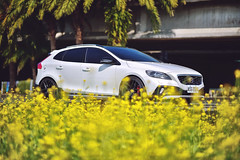 又到油菜花的季節 (M.K. Design) Tags: taiwan volvo moment life travel flowers bokeh nikon nature scenery cars yellow rdesign polestar modified kw stance afs 105mmf14e tele primelens madebysweden 台灣 國際富豪 瑞典國寶 汽車 寫真 油桐花 改裝 自然 壓縮 定焦鏡 淺景深 散景 風景 旅行 生活