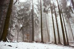 Inverno (Marco Allegro) Tags: