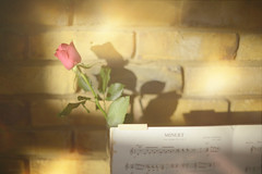 The Graceful Minuet.. (KissThePixel) Tags: rose pinkrose flower pinkflower light piano music sheetmusic musicscore minuet sunlight graceful delight delicate smooth soft softbokeh smoothbokeh fineart stilllife stilllifephotography nikon nikondf nikkor nikkor12 f12 gold pink instrument dance