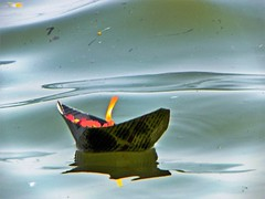 Allahabad, Triveni Sangam 06 (juggadery) Tags: 2015 india uttarpradesh water religion hindu boattrip diya