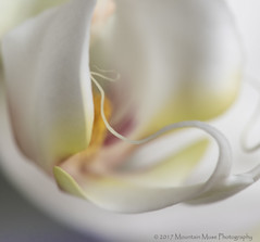 Orchid on an icy morning (MountainMuse (BJ Bassler)) Tags: shootthru painterly abstracts macro orchid