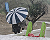 Paraplu (Steenvoorde Leen - 5.7 ml views) Tags: 2017 noordwijk strand beach paraplu plu parasol regenschirm umbrella parapluie paraguas ombrello guardachuva paraply regen rain pluie illuvia pioggia chuva regn