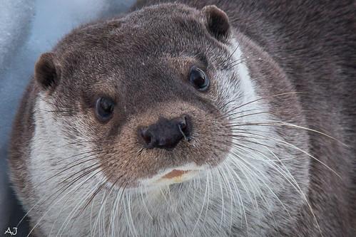 Otter - Natuurpark