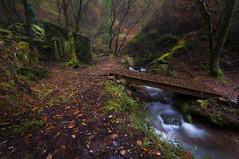 Ruta do Rio San Martiño (jojesari) Tags: rutadoriosanmartiño ar317g 12414 jojesari suso riosanmartiño meis pontevedra galicia otoño