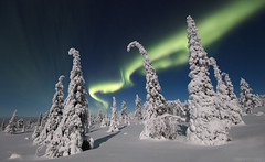 Snowy Forest (Mikko Lönnberg) Tags: suomi sky scenery finland fell auroras auroraborealis arcticlights arctic aurora muonio winter moon night northernlights nightscape nightphotography nationalpark nature canon trees mikkolönnbergphotography