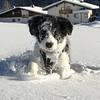 Monti (antonhafele) Tags: dog hund bordercollie