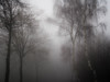Waiting for Christmas... (ursulamller900) Tags: pentacon28100 birch birken fog nebel landscape landschaft winter