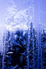 Drawing Trees with Frost (janefenya1313) Tags: frost frosty winter wintery ice cold painting paint nature blue canada crystal crystals fractals
