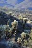 Flora - Arizona - Pinal County (Mike's Mode (Miguel H.)) Tags: flora desert arizona cactus cholla yucca agave mammillaria echinocereus flores flowers