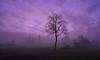Mist Beats Sunrise (fred kottan) Tags: 16mm austria dorf fujifilm landscape landschaft loweraustria marchfeld mist nebel niederösterreich österreich sonnenaufgang sunrise village weinviertel