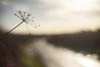 Not a River (i-r-paulus) Tags: pentacon legacylens road wettarmac tarmac rain northlew devon cowparsley landscape