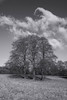 Trees, Polesden Lacey, Surrey (tonybill) Tags: cold fujifilmxt2 fujinonxf1655mmf28 january nationaltrust polesdenlacey sunshine surrey
