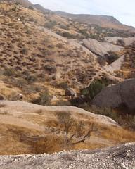 025 The Big Boulder Control (saschmitz_earthlink_net) Tags: 2018 california orienteering vasquezrocks aguadulce losangelescounty laoc losangelesorienteeringclub