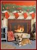 Merry Corgmas (Corgibird) Tags: christmas decorations dogs pembrokewelshcorgi pets holiday garland stockings presents