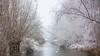 Winter paradise (Alex Verweij) Tags: swan swans lumierepark alexverweij winter 10dec2017 almere cold snow sneeuw canon 5d water ice ijs knotwilg 2017
