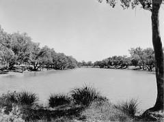 Anglų lietuvių žodynas. Žodis waterhole reiškia n  vandens duobė; duburys 2 šaltinis (dykumoje); (laukinių gyvūnų) girdykla 3 eketė lietuviškai.