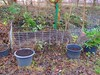 nun ist der Kompost reif (Sophia-Fatima) Tags: mygarden meingarten naturgarten gardening kompost komposthaufen compost