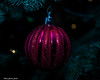Red Ornament (that_damn_duck) Tags: christmas2017 christmasornament decoration tree lights glitter