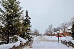 Welcome to My Neighbourhood (Haytham M.) Tags: giving generosity peace canada ontario street country houses evergreen tree trees christmas december cold storm wind snow