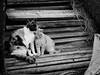 3163 - Cats (Diego Rosato) Tags: gatti cats madre mother figlio son bianconero blackwhite animali animals rawtherapee fuji x30