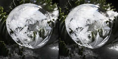 Depth of Winter (Don Komarechka) Tags: snow frost freezing soap bubble backlit 3d stereo stereoscopic winter nature evergreen frozen crystal growing orb sphere ball macro