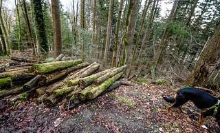 Kiri abandons the wood pile