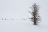 Winterliche Tristess (berndtolksdorf1) Tags: jahreszeit winter schnee bäume strauch outdoor weis