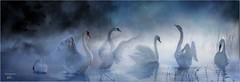 Swan lake (digital-art) (G.LAI(on and off ,)) Tags: swan lake paint bird nature landscape chinese traditional painting p piatic 天鹅 国画