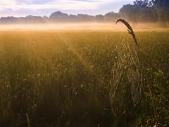 Foogy morn on the Cherokee marsh.jpg (Darren Berg) Tags: spider web spiderweb cherokee marsh fog foggy sunrise grass rays dof explore explored
