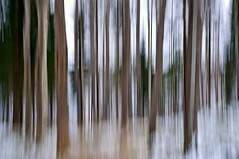 ICM (Stefano Rugolo) Tags: stefanorugolo pentax k5 kepcorautowideanglemc28mm128 forest abstract icm winter snow blur hälsingland sweden