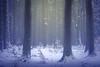 Colder (matthiasstiefel) Tags: advent christmas xmas pillars snow germany bavaria season