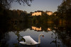 Swan lake (Michel Couprie) Tags: europe france essonne water lake swan animal bird architecture reflection canon eos couprie sunrise composition light