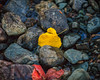 Last sight of Autumn (Juan Pablo J.) Tags: autumm rocks reflection river longexposurephotography color canon5dmkii yellow