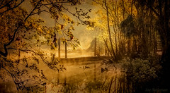 l'inspiration vient des cieux (JDS Fine Art Photography) Tags: river cold mist misty enchanting inspiration inspirational trees sunrise beauty naturesbeauty naturalbeauty spiritual rays lightrays illumination goldenlight golden nature