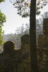 La luz se cuela (palm z) Tags: sintra portugal ruinas castillo castelo mouros moros árbol