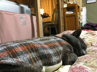 """So comfortable..."""