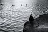 Closer To The Edge (sdupimages) Tags: noirblanc blackwhite bird pigeon oiseaux edge rebord paris street rue water eau bw nb contrast light lumiere mbt hmbt