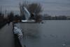 Lungolago, Mantova (pepolino) Tags: inverno winter lago acqua lungolago mantua lake water mantova mincio gabbiano seagull