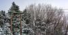 lines... (HarisMichail) Tags: snow greece parnitha mountain trees powerlines landscape white nikon nikond5200 d5200 nature