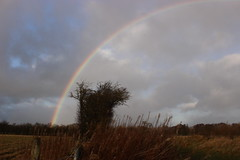 rainbow (kokoschka's doll) Tags: rainbow tree bishopauckland westauckland sky clouds