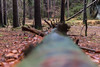 IMG_0120 (Le Radiophare) Tags: czech republic vsemly ceska kamenice srbska forest autum january intercamp ferdinanda