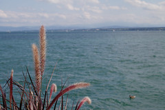 Friedrichshafen (Caró) Tags: friedrichshafen germany deutschland europe europa euro alemanha summer verão verano badenwürttemberg bodensee bodenseekreis tübingen sommer outdoor outdoors lanke lago lakeconstance eu ue
